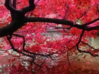 蘇州天平山楓葉什么時候紅