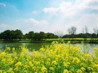 蘇州園區春游好去處(持續更新)