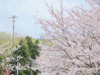 2021蘇州園區哪些小區可以賞花