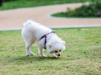 深圳宠物公园地址及交通指南