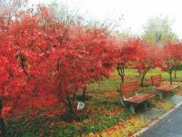 天德湖公园赏枫叶攻略