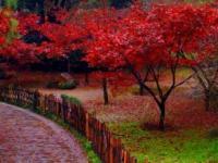 岳麓山赏红叶攻略