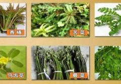 又到挖野菜的季节咯 这10种野菜吃了会要命