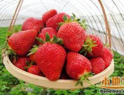 佛山摘草莓的好去处