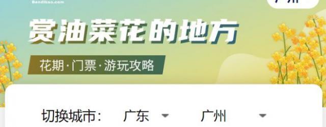 黃澄澄!廣(guang)州(zhou)油菜花最佳觀賞點