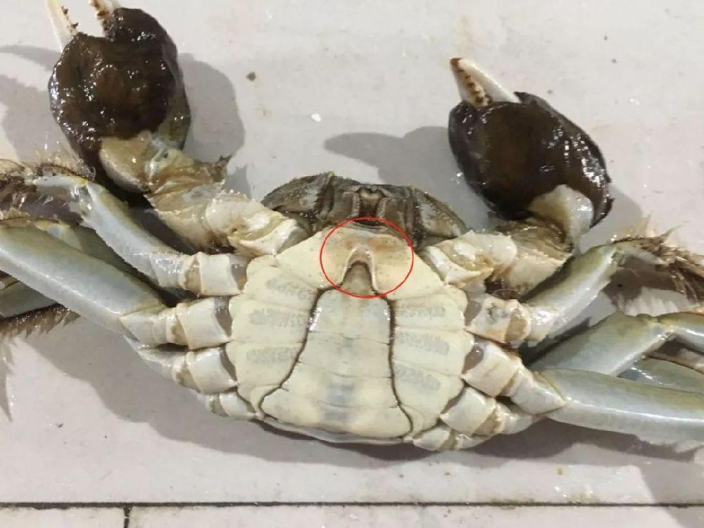 2019年阳澄湖大闸蟹什么时候最好吃?