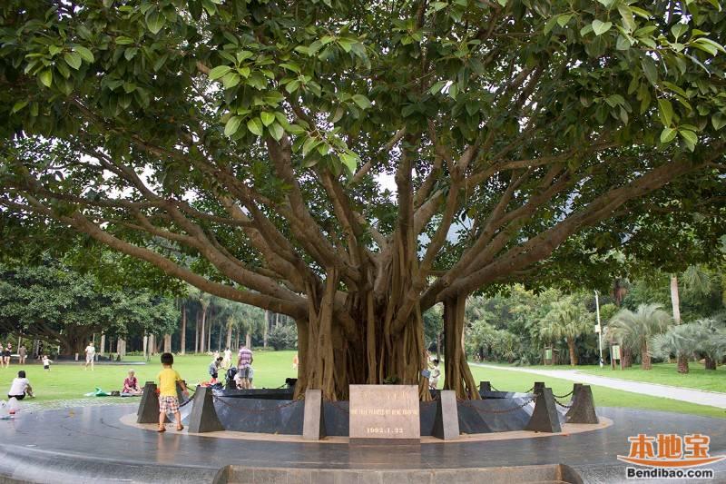 仙湖植物园