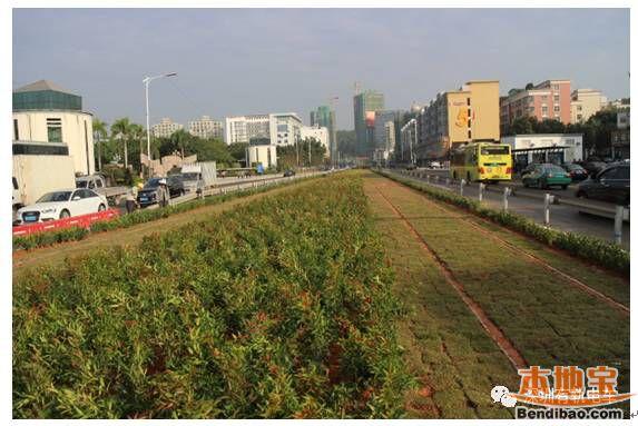 龙华有轨电车示范线绿化完成 距离试运营又近一步