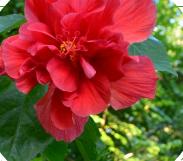 深圳十一国庆赏花指南(品种、观赏地点)