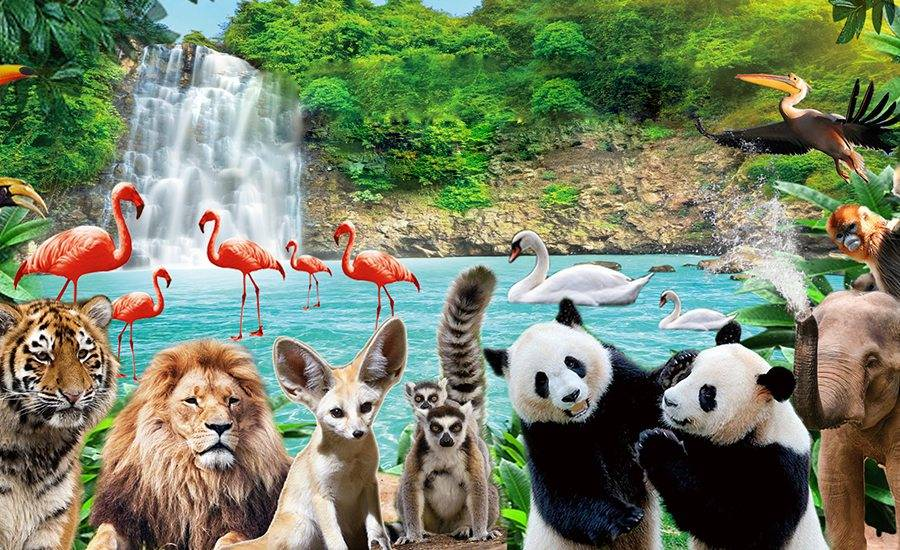 十大城市户籍享特惠!深圳野生动物园优惠票