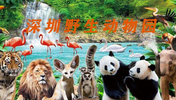 【深圳野生动物园】与国宝级动物尽情互动,一同来感受神奇的动物世界