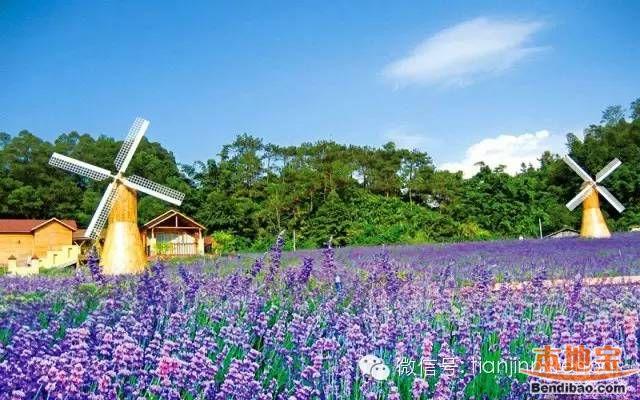 天津端午节赏花的好去处