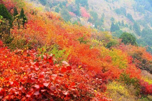 天津周边16大赏红叶的好地方