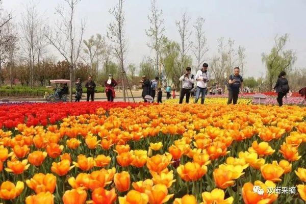 2021天津雙街花卉博覽園五一游玩攻略(時間 門票 活動)