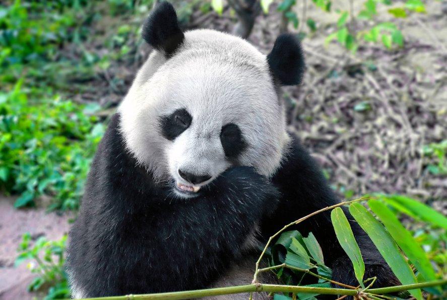天津動物園門票可以網上購買嗎?