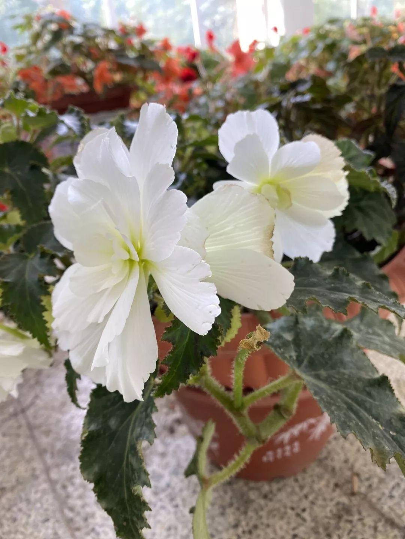 厦门园林植物园春节赏花指南