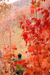 野三坡赏枫攻略